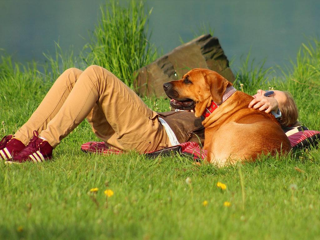 Bild von Urlaub mit Hund  in Italien Ferienhaus