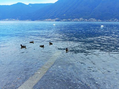 Bilder von Comer See Ferienwohnung Del_Pescatore_Colonno_60_Landschaft