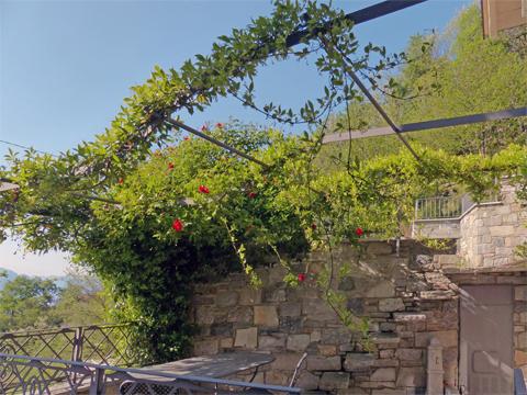 Bilder von Comer See Ferienwohnung Giglio_Viola_Gravedona_20_Garten