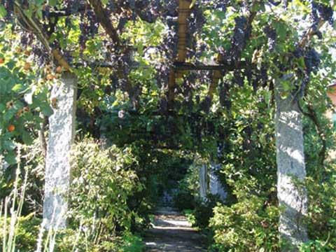 Bilder von Comer See Ferienwohnung Nonna_Marisa_Vercana_20_Garten