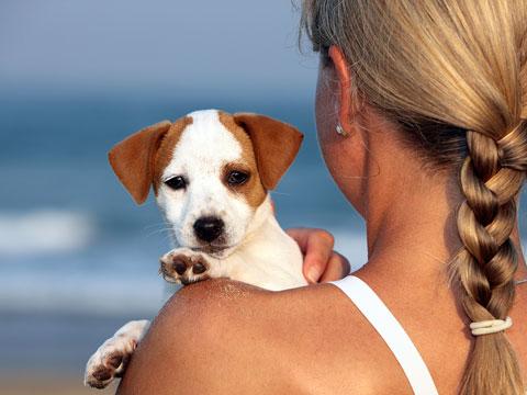 Bild von Urlaub mit Hund