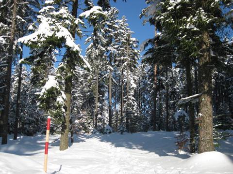 Bild von Winterurlaub am Comer See
